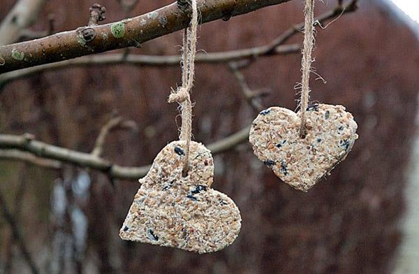 hjerter-til-havens-fugle1