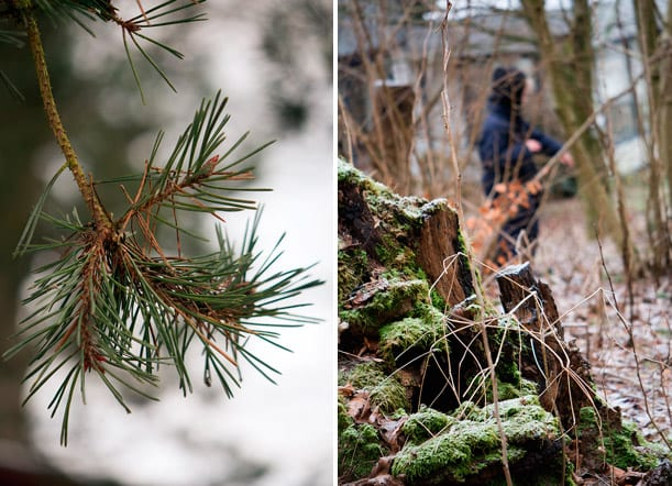 i-skoven-gran