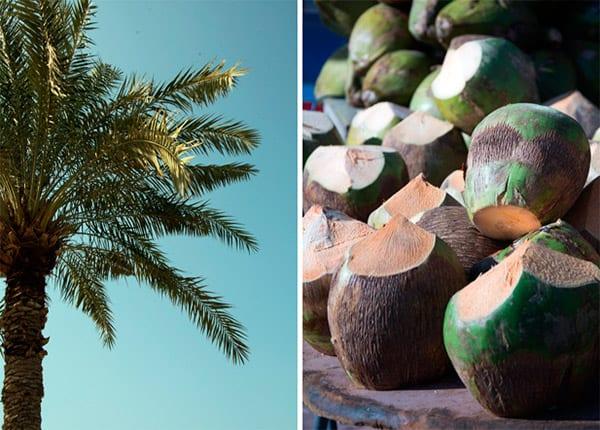 kokosnod