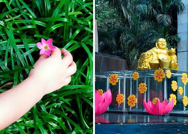 lotusblomster-vietnam