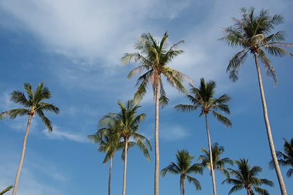 palmer-koh-lanta