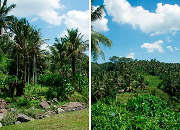 ubud-heaven-nature
