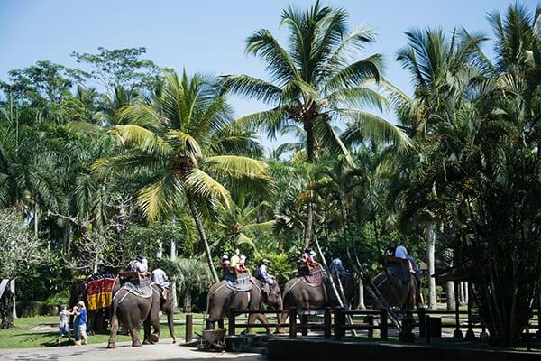 elefanter-paa-bali