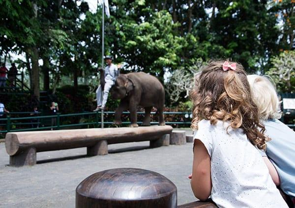 elefantpark-bali