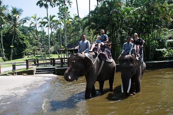 elefantridning_bali