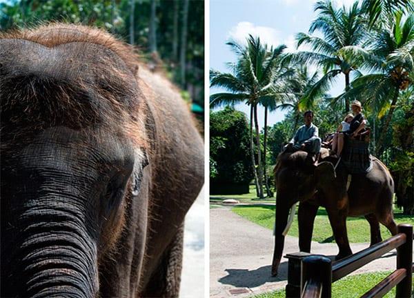 elephant-bali-visit