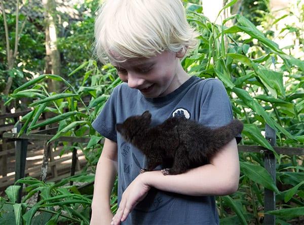 luwak-baby