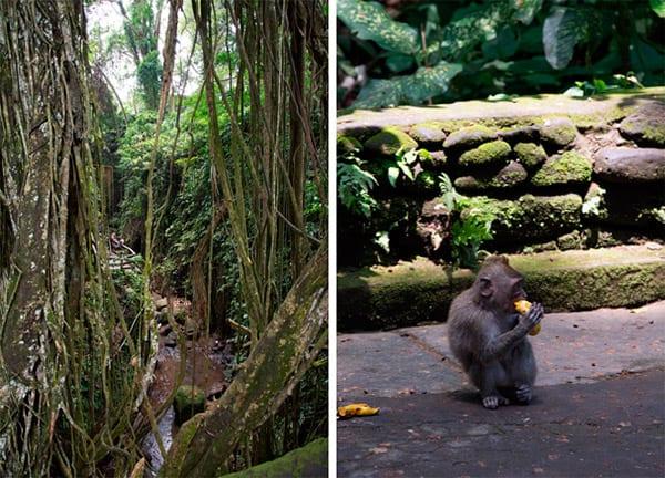 monkey-bali