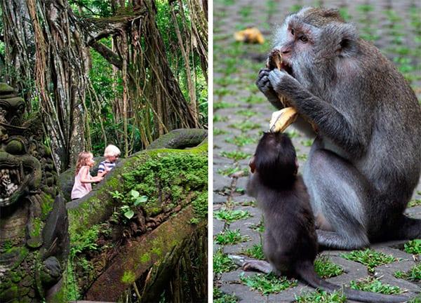 monkey-ubud-bali