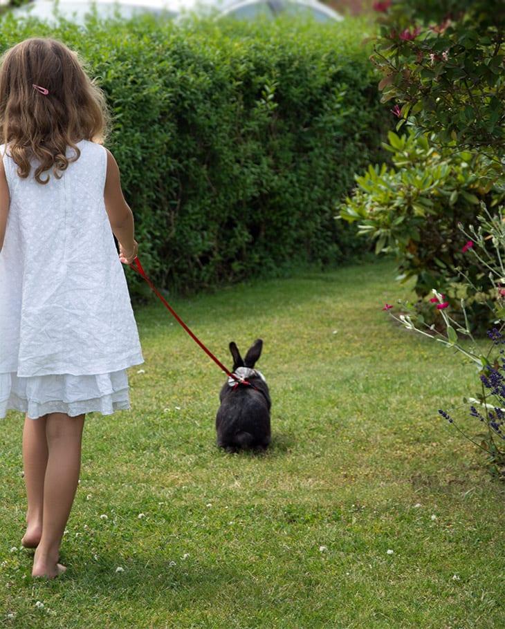 Kanin på gåtur