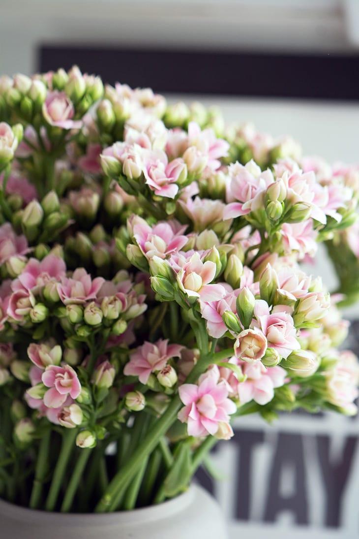 rosa-blomster