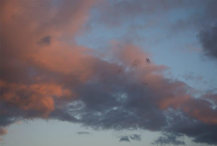 solnedgang-sortsol
