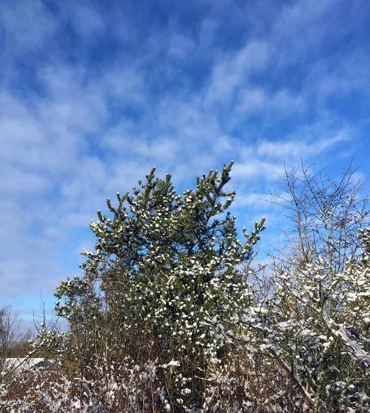sne og blå himmel