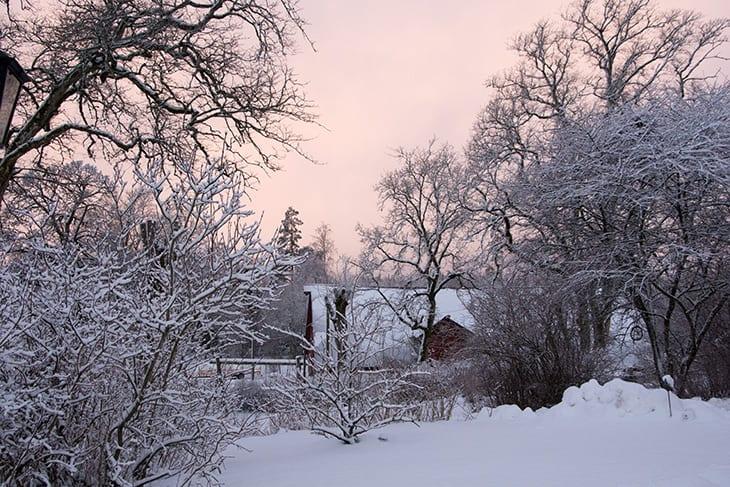 lyserød sol og sne