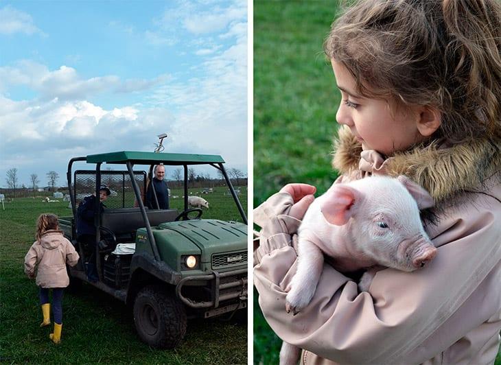 fyfødt gris