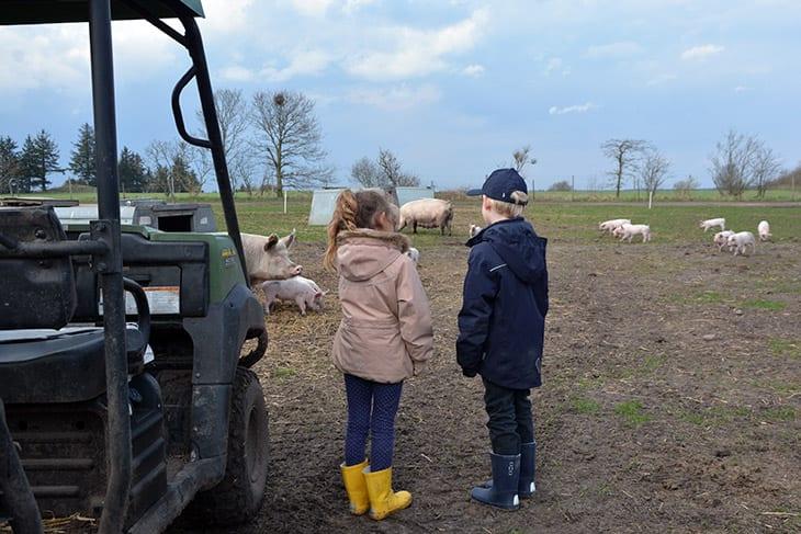 øko landbrug dansk