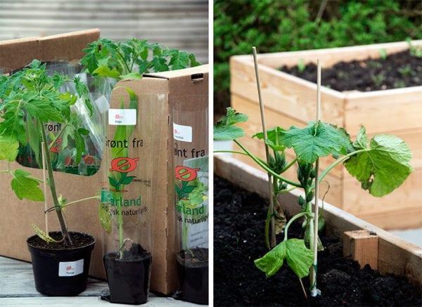 aarstiderne planter