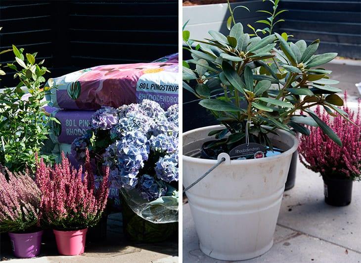 plante-i-haven