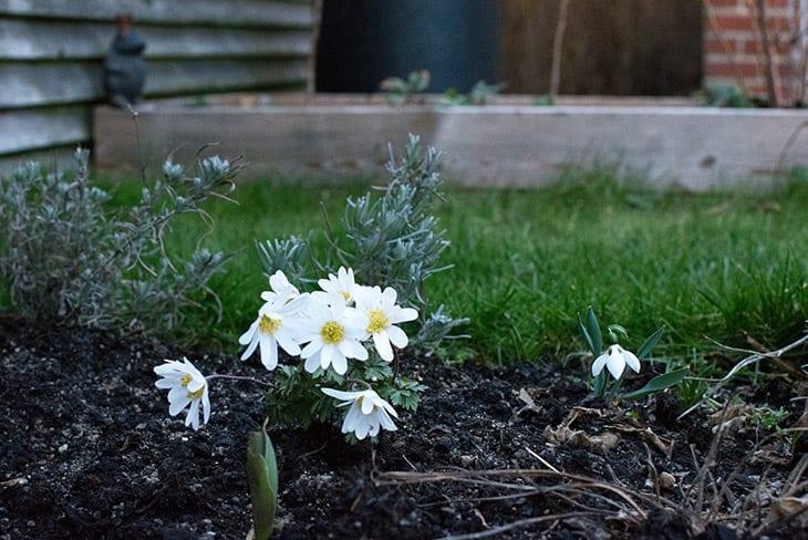min have i marts