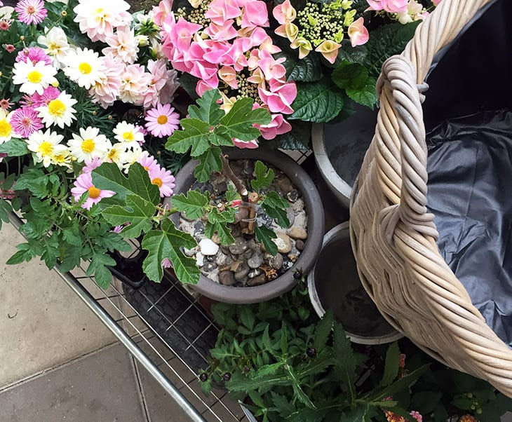 blomster shopping