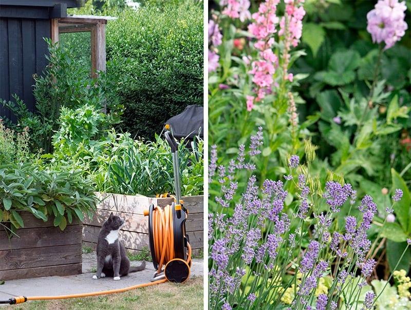bæredygtig vanding af have