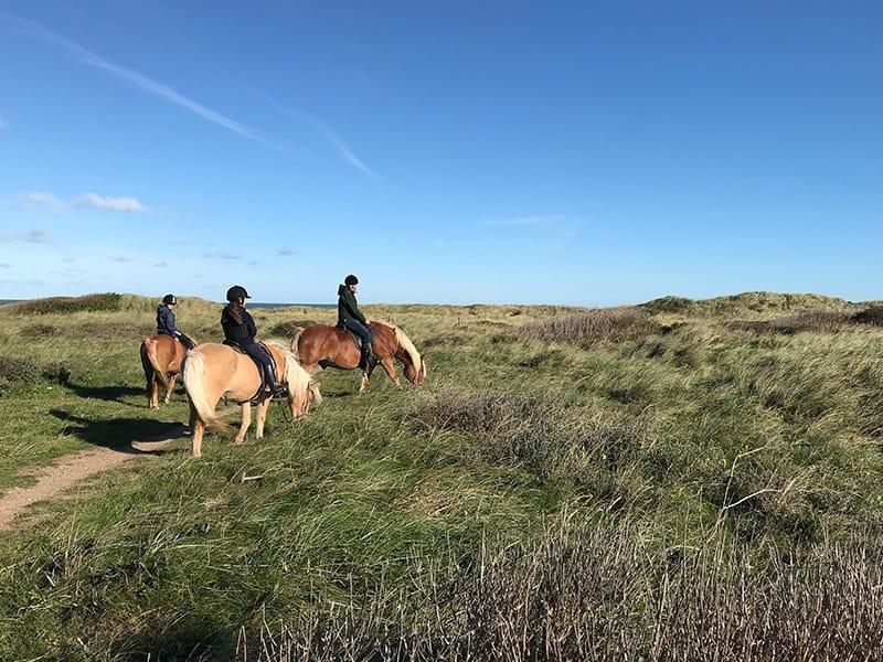islandske heste vesterhavet