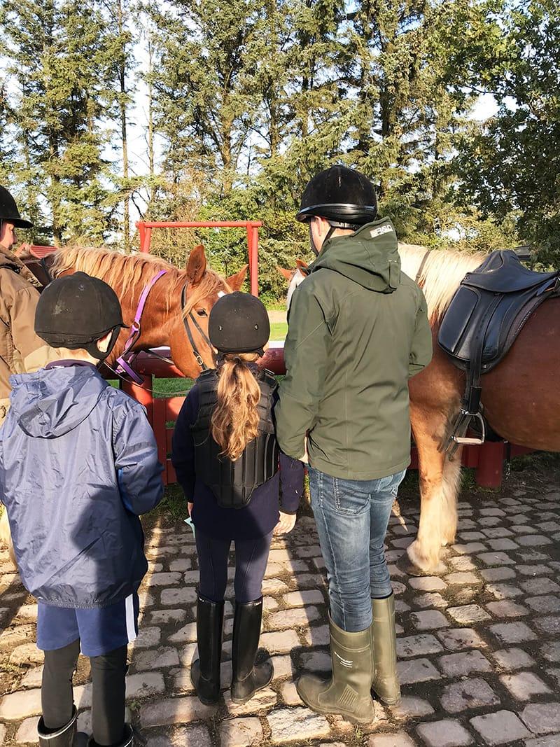 ridetur islandske heste