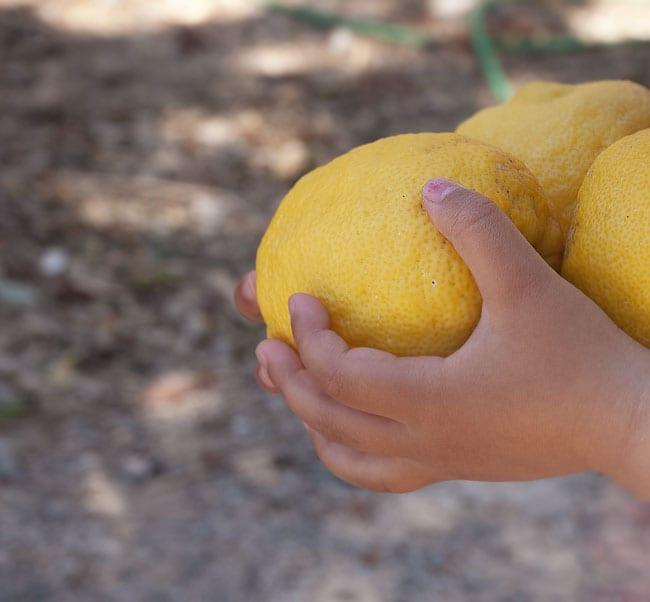 friske-citroner