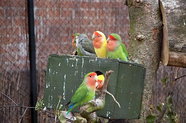 fugle-munkholm-zoo