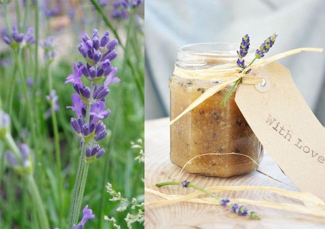 hjemmelavet-bodyscrub-med-lavendel