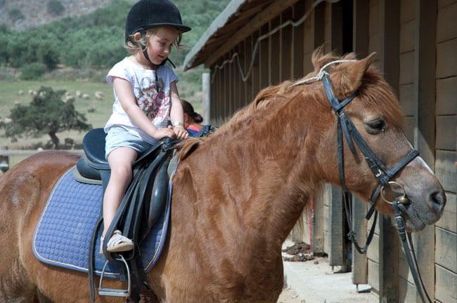 kreta-paa-hesteryg