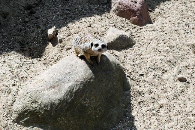 Munkholm zoo dyr porno